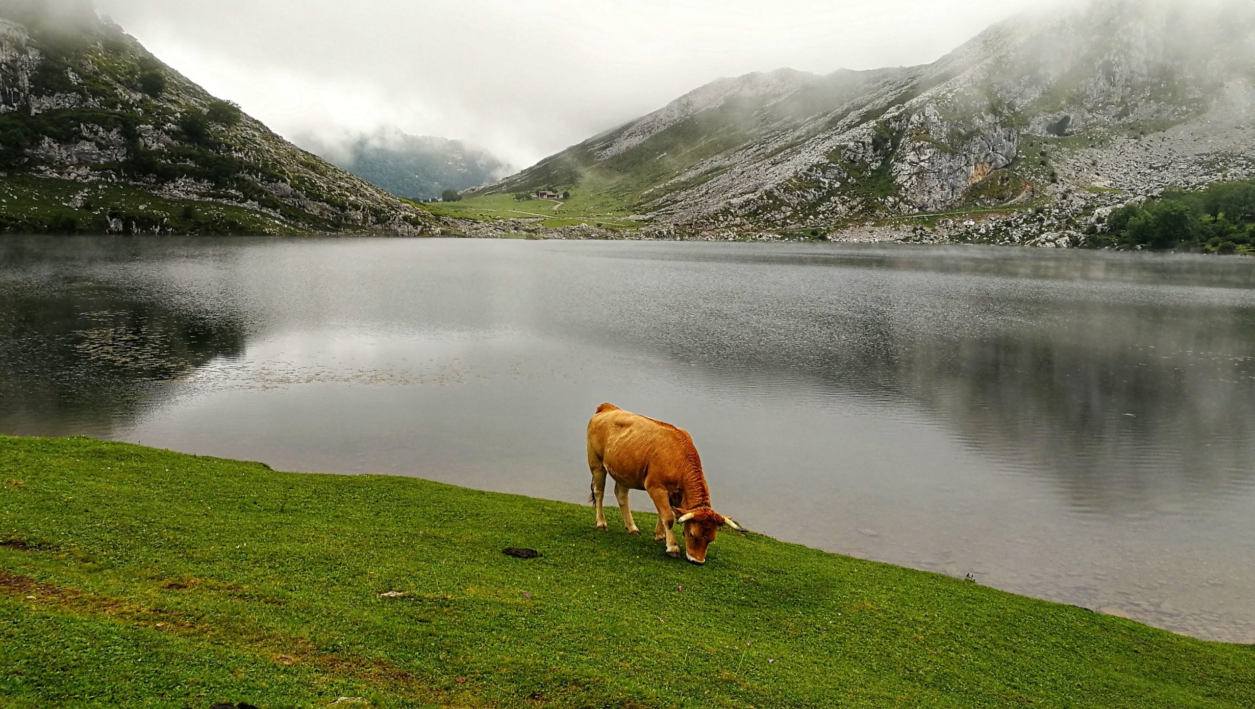 lagos de covadonga familias numerosas